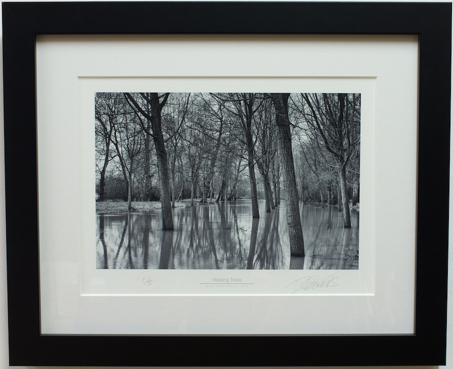 Wading Trees – Gallery Thirty One