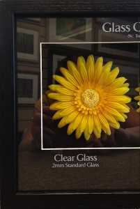 G31_Std_Glass_Only